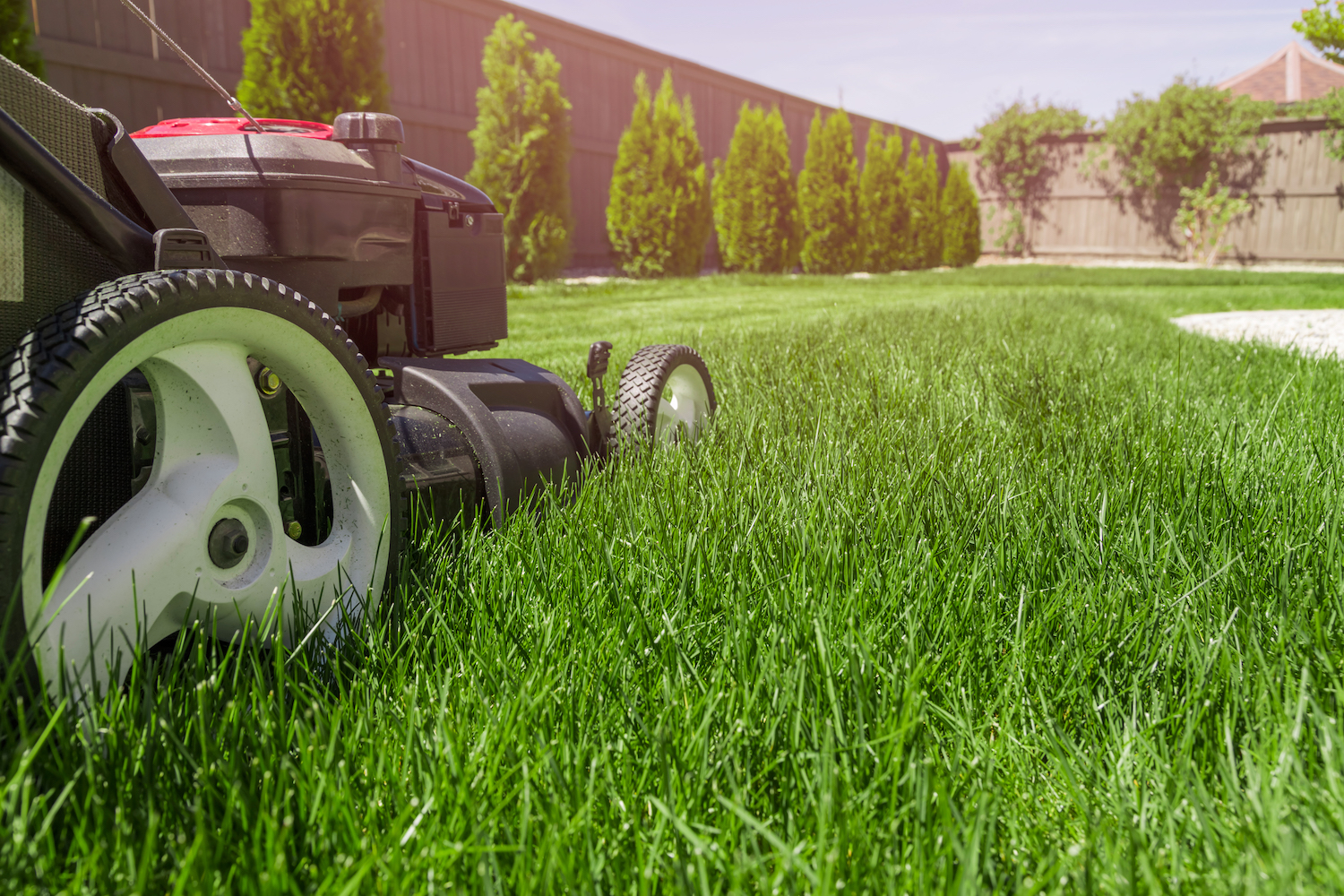 6 Ways to Conquer Your Lawn